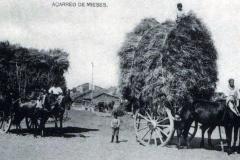 Mieses